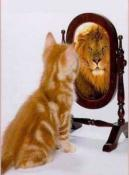 Chat lion miroir1
